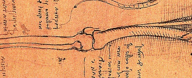 kneebone1